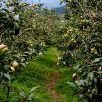 Wisata Sehat Segar: Petik Apel!