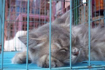 Pasar Burung Splendid Kota Malang6