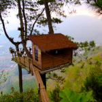 Omah-kayu-Malang-Black-Ceetah--150x150